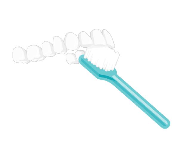 Zähne richtig putzen  Innenflächen vorne oben | Auf und abwärts bürsten